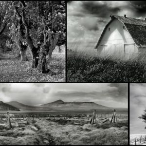 3-Day Digital Photography Workshop with Kelly Abdoney