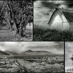 Digital Photography Workshop with Kelli Abdoney